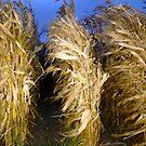 When the corn begins to dance . . . . . by evon ski