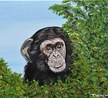Little Chimp by Tricia Winwood