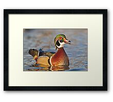 Happy to be a wood duck Framed Print
