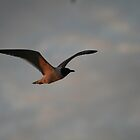 The Seagull by camerawoman1