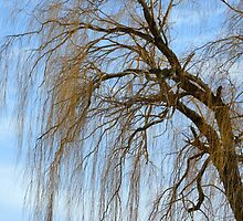 Weeping Willow by Laurie Minor