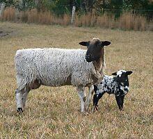 Appaloosa Lamb & Mum by louisegreen