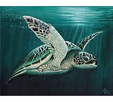 """Moonlit"" - Green Sea Turtle, Acrylic Photographic Print"