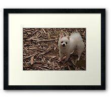 Furry doggy say Hi to me Framed Print