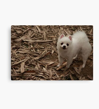 Furry doggy say Hi to me Canvas Print