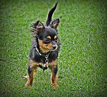 I'm A Tough Little Dog! by JaninesWorld