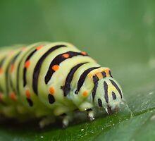 green caterpillar by Bartosz Chajek