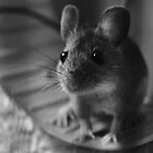 A Mouse Called 'Intrepid' #15 by Matthew Floyd