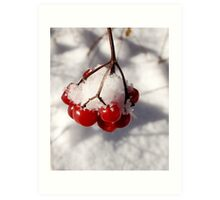 American Cranberries in Snow Art Print