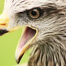Squawk !!!! by MichelleRees