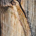 Strange Birds by Susana Weber