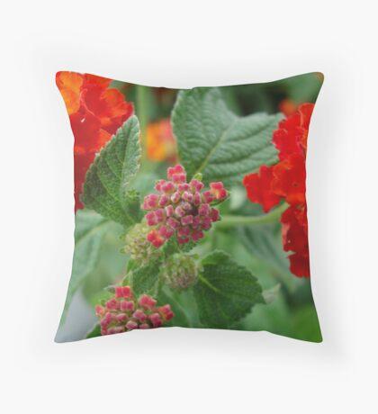 Orange Lantana - close up Throw Pillow