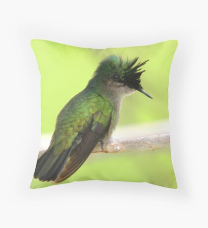 Antillean Crested Hummingbird Perched on a Branch Throw Pillow