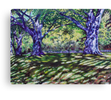 'Trees Along The Carriage Trail'  Canvas Print