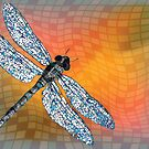 Dragon fly by Laschon Robert Paul