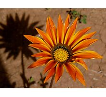 Marrakech Flower Photographic Print