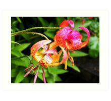 Flowers, Donegal Art Print
