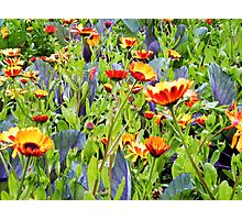 Flowers, Donegal Photographic Print
