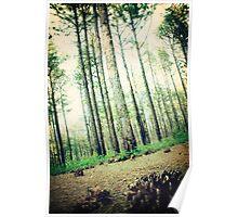long leaf pine trees in Eastern North Carolina Poster
