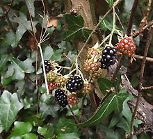 wild fruit berries -(120811)- digital photo by paulramnora