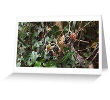 wild fruit berries -(120811)- digital photo Greeting Card