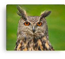 Eagle Eye Owl Canvas Print
