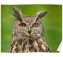 Eagle Eye Owl Poster