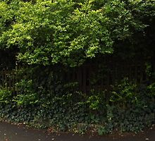 entrance to The Rookery -(120811)- digital panorama photo by paulramnora