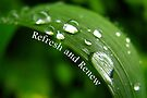 Refresh and Renew (Card) by Tracy Friesen