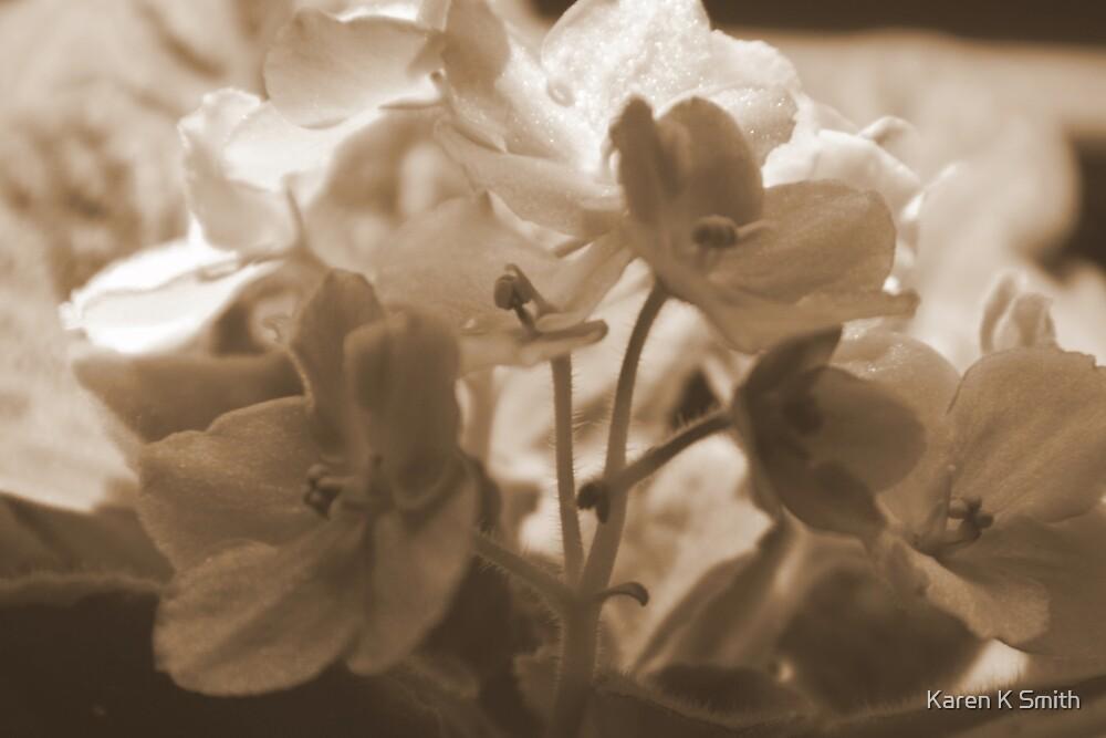 Violets in Sepia by Karen K Smith