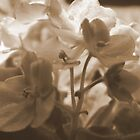Violets in Sepia by Karen K Smith