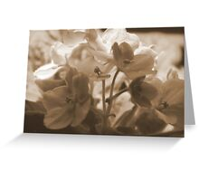 Violets in Sepia Greeting Card