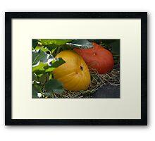 Pumkin Patch Framed Print