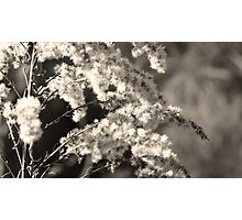 Fluff Photographic Print