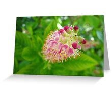 Ruby Spice Greeting Card