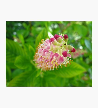 Ruby Spice Photographic Print