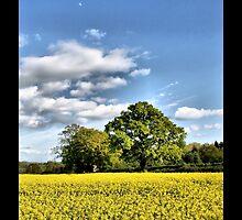 English Oak by samwisewoahzay
