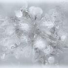 Crystal Star by Denise Abé