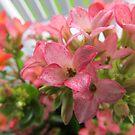 All in Pink by Diane Petker