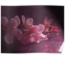 Peach Blooms Poster