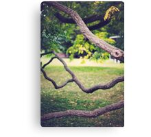 Twisted Branches Canvas Print