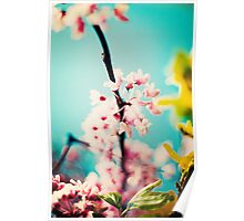 Early spring branch flowers on turquoise background Poster