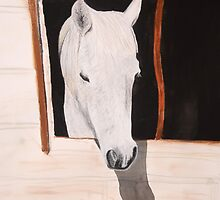 Cameo the Pony Suns Herself Through the Window by Teddie McConnell