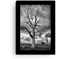 BW Tree Canvas Print