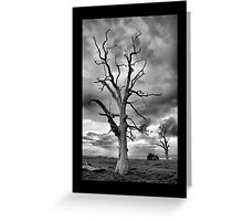 BW Tree Greeting Card