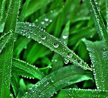 Leaf Diamonds by Kate Eller