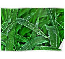 Leaf Diamonds Poster