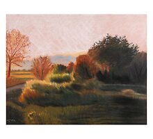 Walking Trail, Late Afternoon by Teddie McConnell