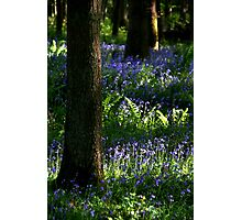 Bluebell Wood Photographic Print