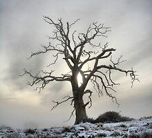 Winter Tree by samwisewoahzay
